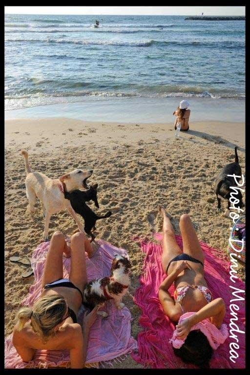 along-the-dogs-beach--cdinu-mendrea-1-