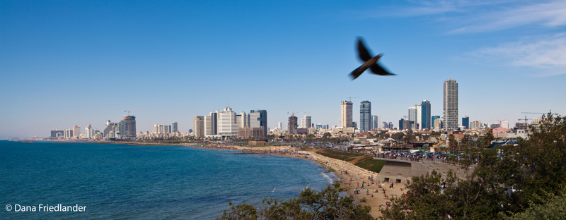 Experience Tel Aviv's Distinct Urban Energy